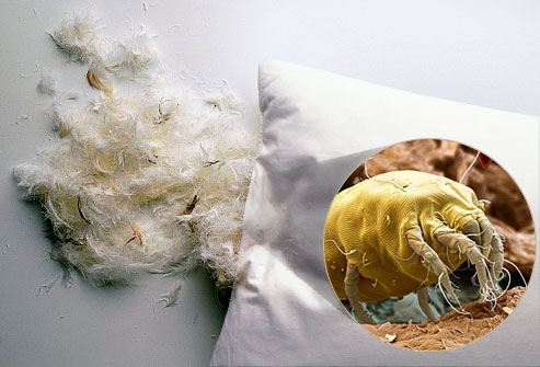getty_rm_photo_of_feather_pillow2