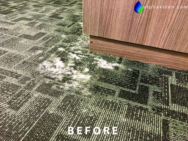 Office Carpet Cleaning Mould Before-01