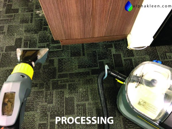Office Carpet Cleaning Mould Processing-01